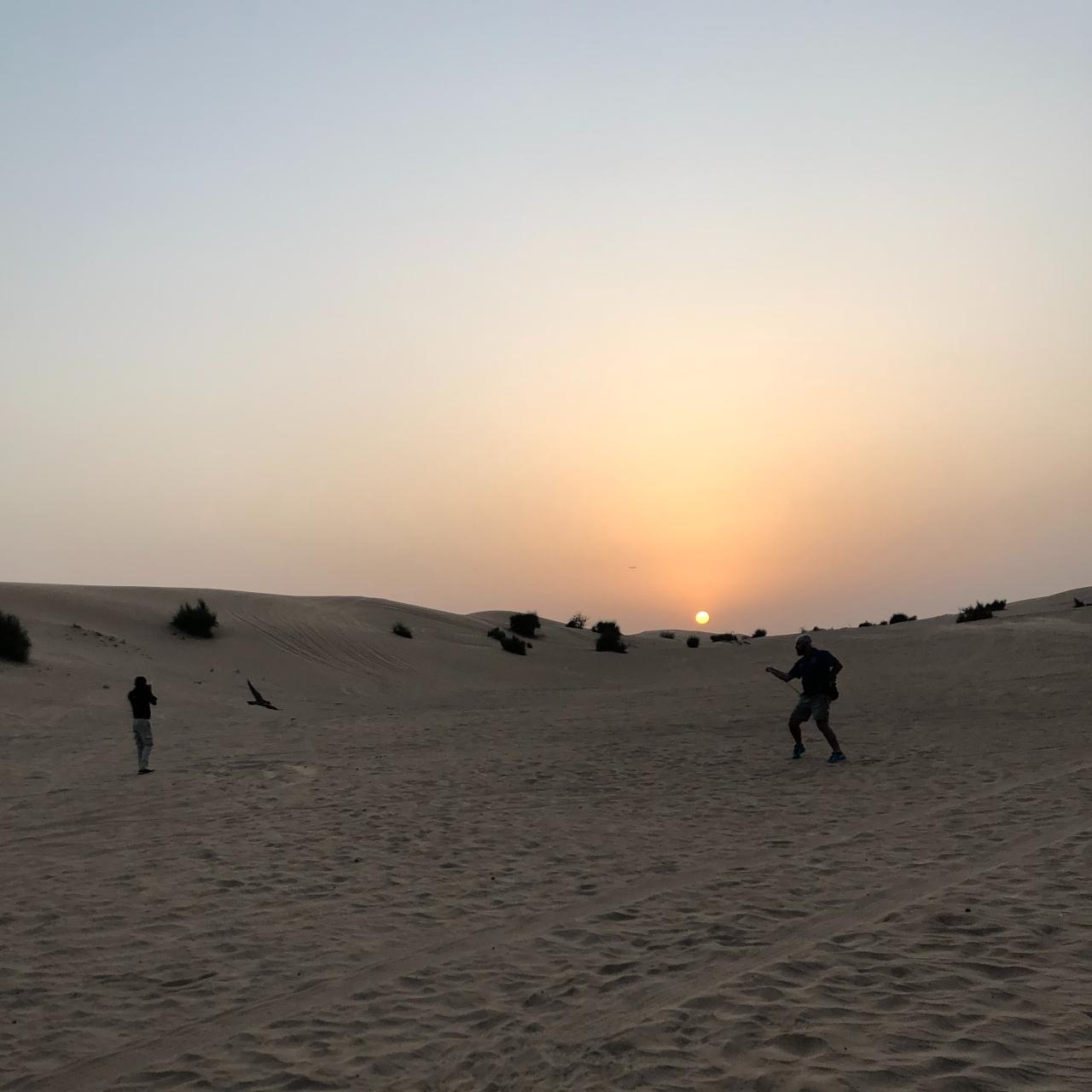 Sunset falconry Dubai desert