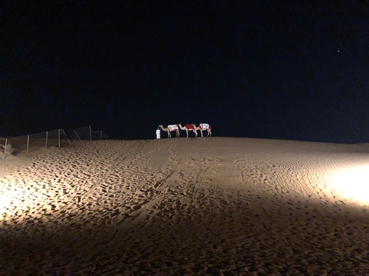 Camels at night Dubai desert